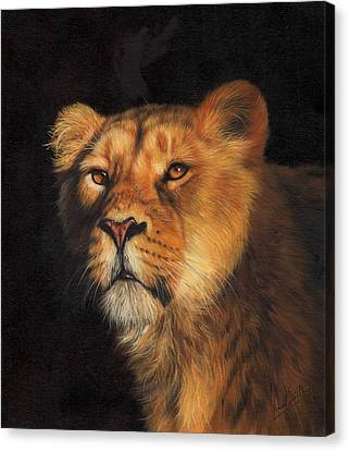Portrait Of A Lioness Canvas Print by David Stribbling