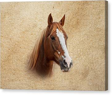 Portrait Of A Mare Print Canvas Print by Doug Long
