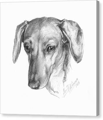 Portrait Of A Mini Dachshund  Canvas Print