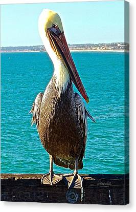 Portrait Of A Perky Pelican Canvas Print by Brian D Meredith