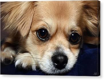 Portrait Of A Pup Canvas Print by Lisa Knechtel