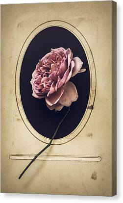 Canvas Print - Portrait Of A Rose by Amy Weiss
