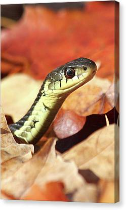 Canvas Print featuring the photograph Portrait Of A Snake by Doris Potter
