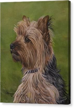 Portrait Of A Yorkie Canvas Print by Sharon Nummer