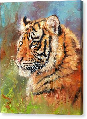 Portrait Of A Young Amur Tiger Canvas Print by David Stribbling