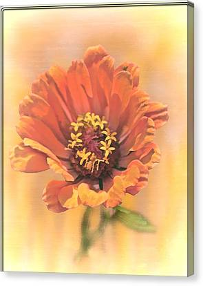 Portrait Of A Zinnia Canvas Print by Larry Bishop