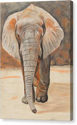 Portrait Of An Elephant Canvas Print by Jeanne Fischer