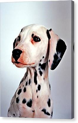 Portrait Of Dalmatian Dog Canvas Print by Lanjee Chee