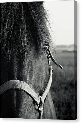 Portrait Of Horse In Black And White Canvas Print by Peter v Quenter