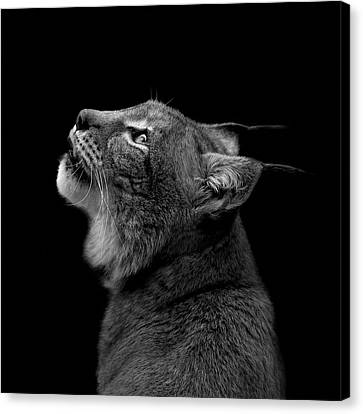 Portrait Of Lynx In Black And White Canvas Print