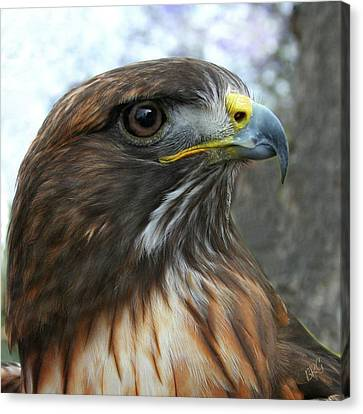 Portrait Of Red-shouldered Hawk Canvas Print by Ben and Raisa Gertsberg