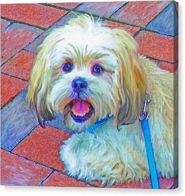 Portrait Of Shih Tzu Canvas Print by Jane Schnetlage