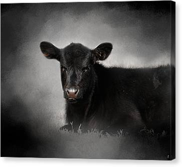Portrait Of The Black Angus Calf Canvas Print