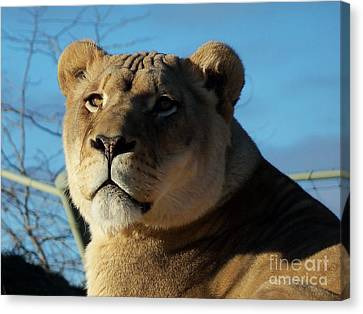 Portrait Of The Mighty Queen Canvas Print by Lingfai Leung