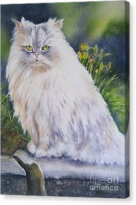 Portrait Of White Cat Canvas Print by Patricia Pushaw