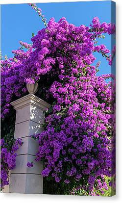 Portugal, Pinhao, Bougainvillea (large Canvas Print by Jim Engelbrecht