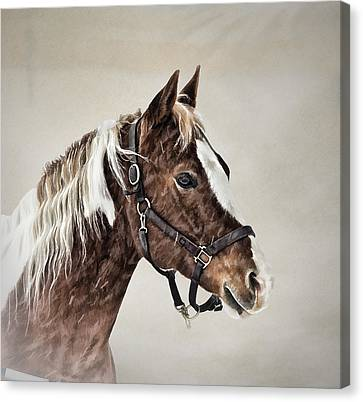 Posed Canvas Print by Gary Smith