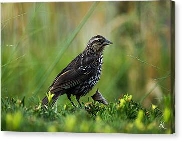 Posing Bird Canvas Print