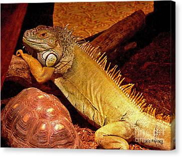 Posing Iguana And Friend Canvas Print