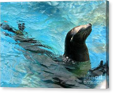 Canvas Print featuring the photograph Posing Sea Lion by Kristine Merc