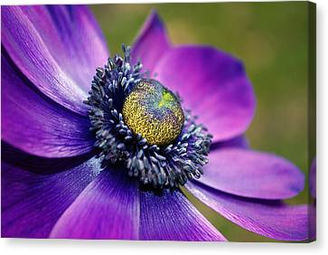 Positively Purple Canvas Print by Kjirsten Collier