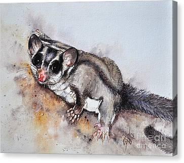 Possum Cute Sugar Glider Canvas Print