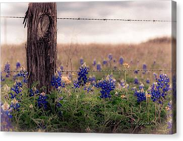 Posted Canvas Print by Allen Biedrzycki