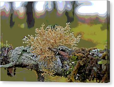 Posterized Antler Lichen Canvas Print by Cathy Mahnke