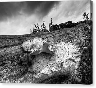 Pot Of Gold - Glowing Fungi Bw Canvas Print by Gill Billington