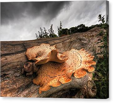 Pot Of Gold - Glowing Fungi Canvas Print by Gill Billington