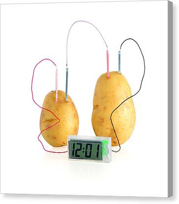 Potato Clock Canvas Print by Science Photo Library