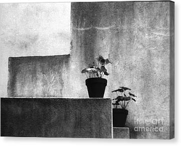 Canvas Print featuring the photograph Pots by Steven Macanka