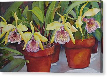Canvas Print featuring the painting Potted Orchids by Judy Mercer