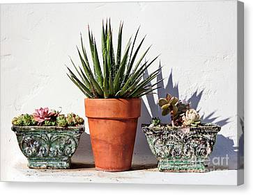 Kate Mckenna Canvas Print - Potted Succulents by Kate McKenna