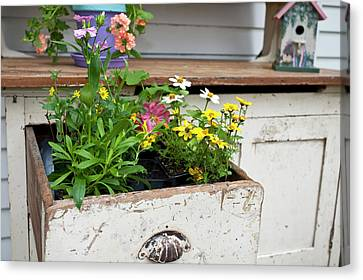 Potting Bench With Flowers In Spring Canvas Print by Richard and Susan Day