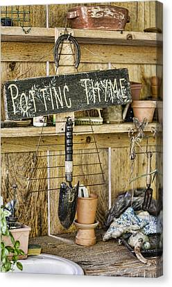 Potting Thyme Canvas Print by Heather Applegate
