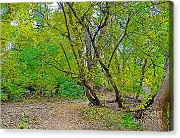Poudre Trees-2 Canvas Print