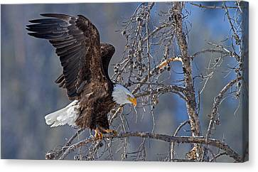 Power And Grace Canvas Print by Sandy Sisti