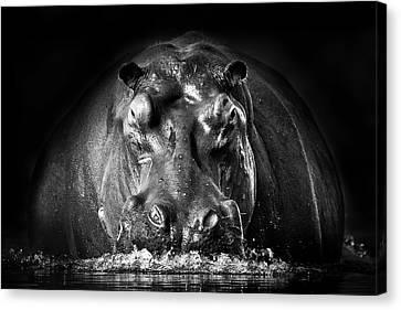 Hippopotamus Canvas Print - Power by Gorazd Golob