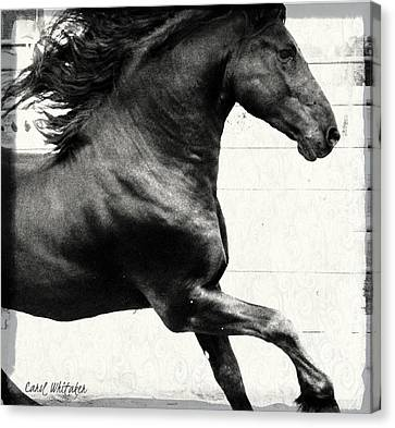 Power Of Stride Canvas Print by Royal Grove Fine Art