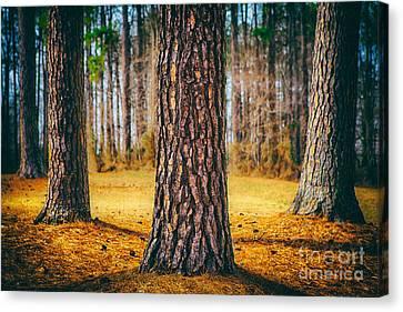 Powerful Pines II Canvas Print