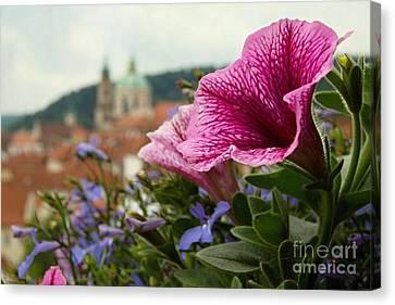 Prague In Bloom Vi - Summer Edition Canvas Print