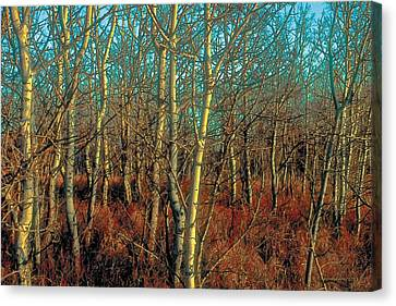Prairie Autumn 8 Canvas Print by Terry Reynoldson
