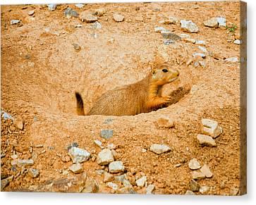 Prairie Dog Digs Canvas Print