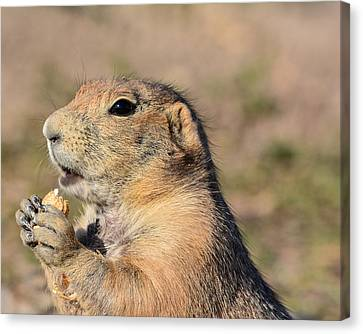Prairie Dog Canvas Print by Robin Williams