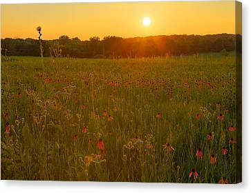 Prairie Flowers With Setting Sun Canvas Print