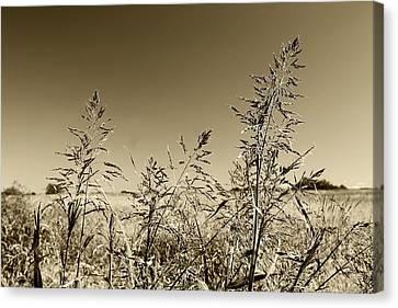 Prairie Grass Canvas Print by Ellen O'Reilly