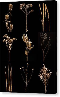 Prairie Plant Still Life Canvas Print by Steve Gadomski