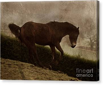 Bay Horse Canvas Print - Prancing Horse by Angel  Tarantella
