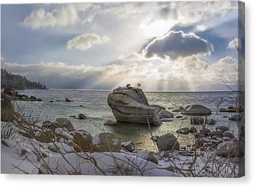 Bonsai Canvas Print - Pray For Snow by Jeremy Jensen